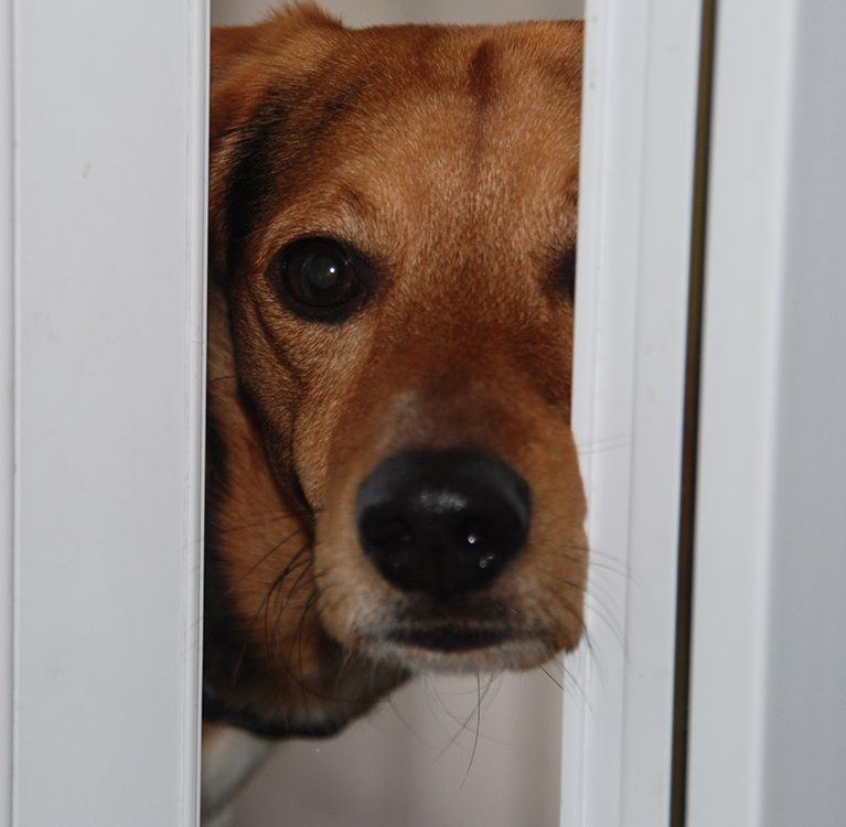 Hund steht in der Tür