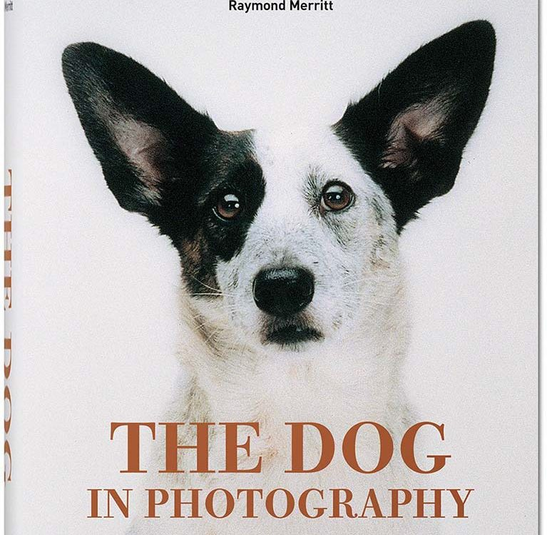 The Dog in Photography Cover