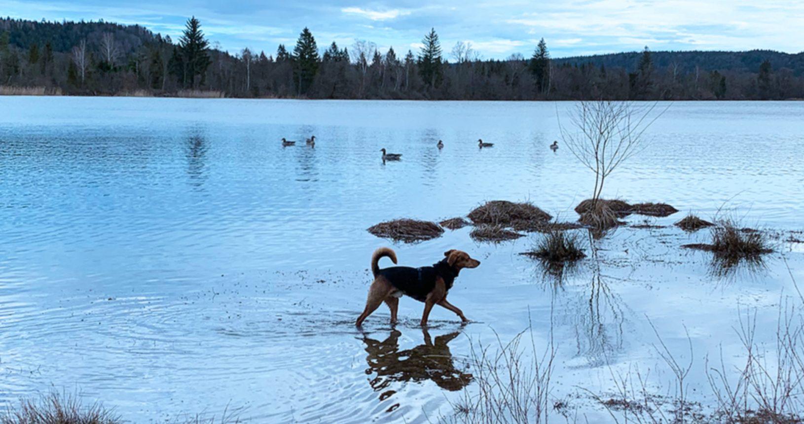Pauli und die Wasservögel
