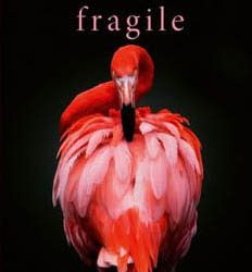 Pauli liest: Fragile